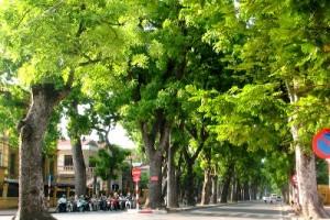 Tuyên truyền thực hiện Đề án Cải tạo hệ thống cây xanh Thành phố Hà Nội giai đoạn 2014 -2015