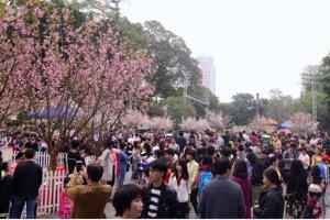 Khai mạc các hoạt động giao lưu văn hóa Nhật Bản tại Hà Nội