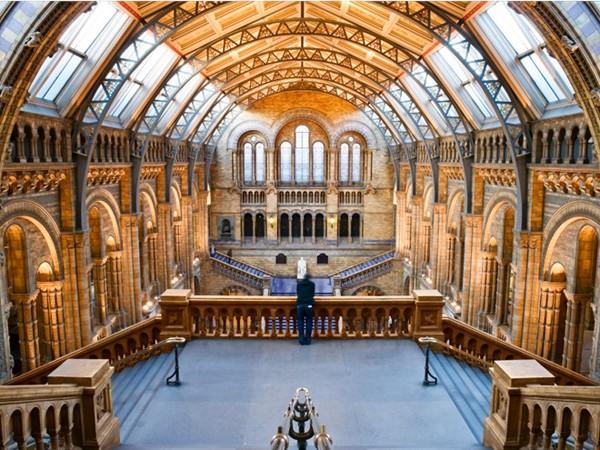Bảo tàng Lịch sử tự nhiên London (Anh) có những tiền sảnh và hội trường rộng với hệ thống chiếu sáng tinh tế cho các khu trưng bày.