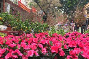 Chợ hoa Hàng Lược ngày giáp Tết