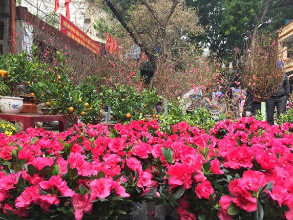 Quất, đào và các loại hoa làm rực rỡ cả dãy phố