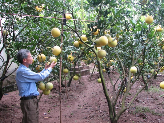 Nhờ tích cực chuyển đổi cơ cấu kinh tế nông nghiệp, thu nhập của người dân được cải thiện đáng kể