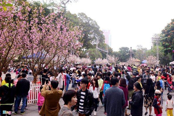 Triển lãm hoa Anh đào năm 2016 được đông đảo người dân và du khách đến tham quan và chiêm ngưỡng