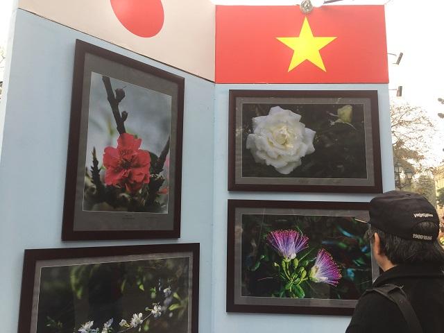 Triển lãm ảnh về các loài hoa cũng được nhiều người quan tâm