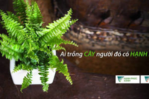 Hà Nội với Ngày hội trồng cây Hạnh Phúc Xanh