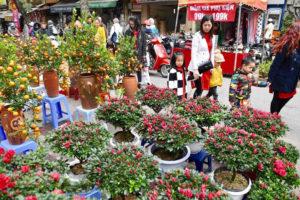 Chợ hoa Hàng Lược – nét văn hóa đẹp của người Hà Nội