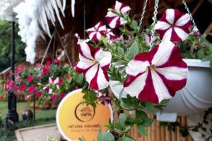 Chợ hoa hồ Văn – Nơi quy tụ nét đẹp truyền thống ngày Tết