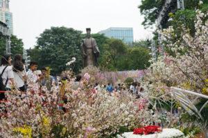 Lễ hội hoa anh đào Nhật Bản – Hà Nội sẽ được kéo dài đến hết ngày 02/4