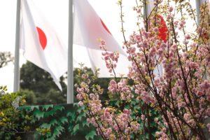 Những hình ảnh đẹp tại Lễ hội hoa Anh đào Nhật Bản- Hà Nội 2019