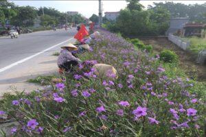 Xã Võng Xuyên xây dựng nhiều tuyến đường nở hoa