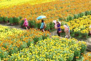 Huyện Mê Linh: Nâng cao đời sống văn hóa trên cơ sở phát huy những giá trị truyền thống