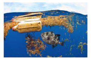 Triển lãm trực tuyến kêu gọi mỗi người hãy hành động để bảo vệ môi trường biển